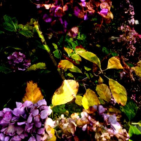 fleurs 4février