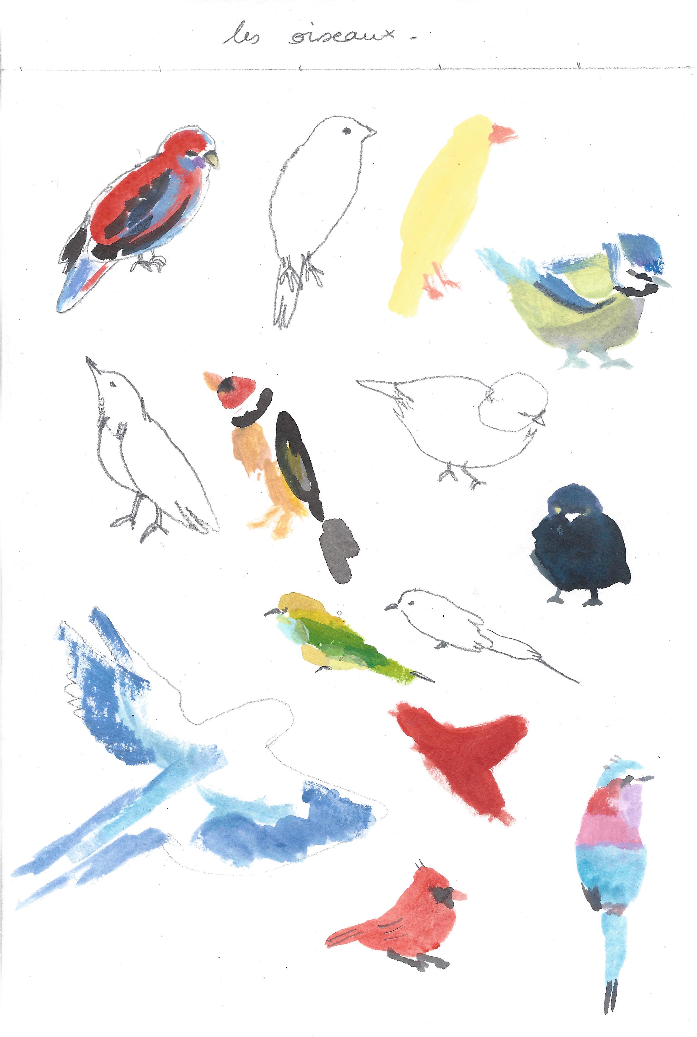 7.oiseaux
