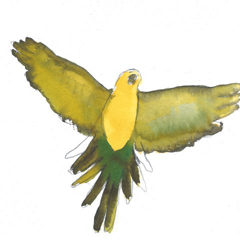 oiseaux recherche copie