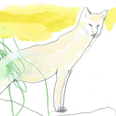 Le loup des steppes ©louisemezel