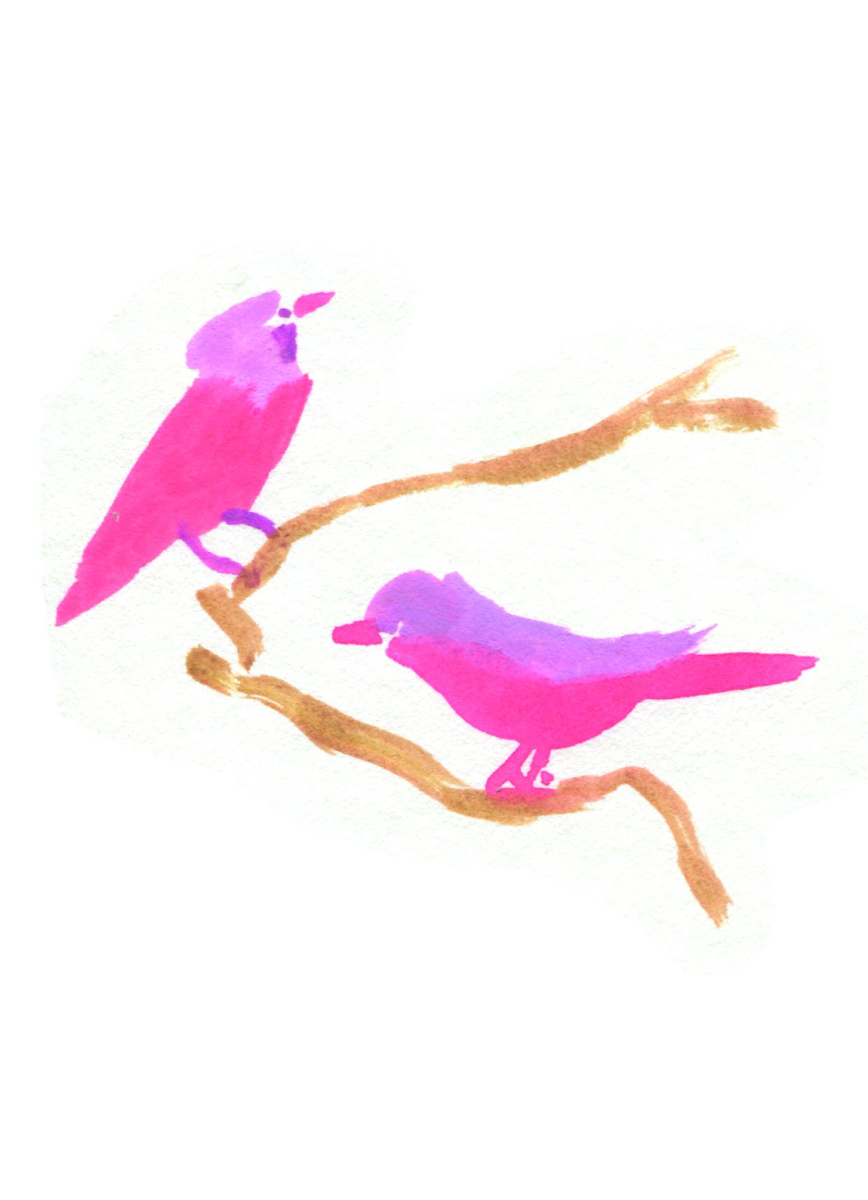 oiseaux4