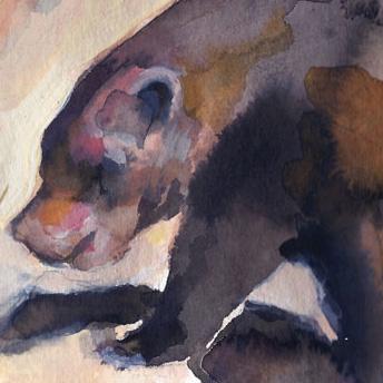 L'ours ©louisemezel