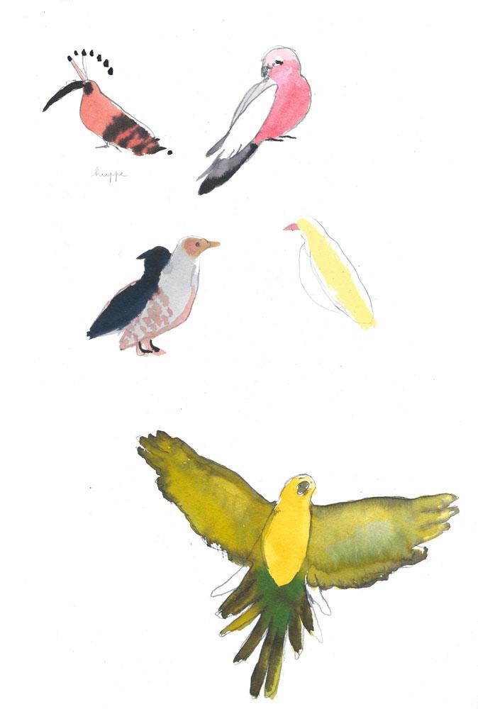 Les Oiseaux ©louisemezel