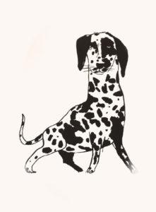 Le premier dalmatien, 56 x 76 cm