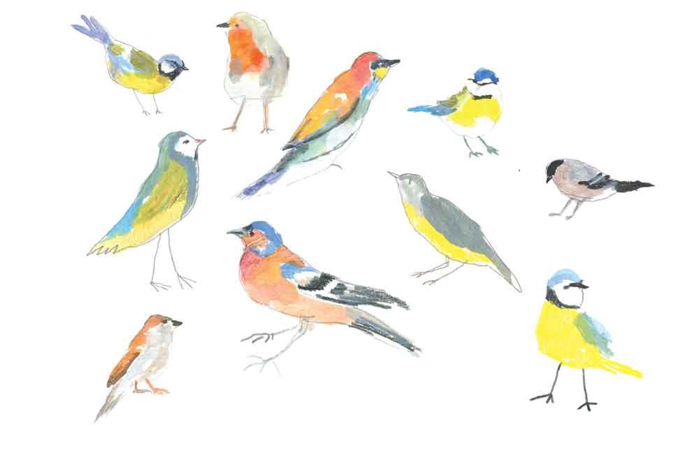 Panel_oiseaux_web